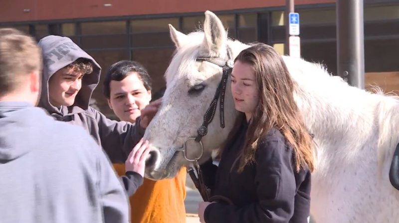 Career Academy students get hands-on learning experience with horse